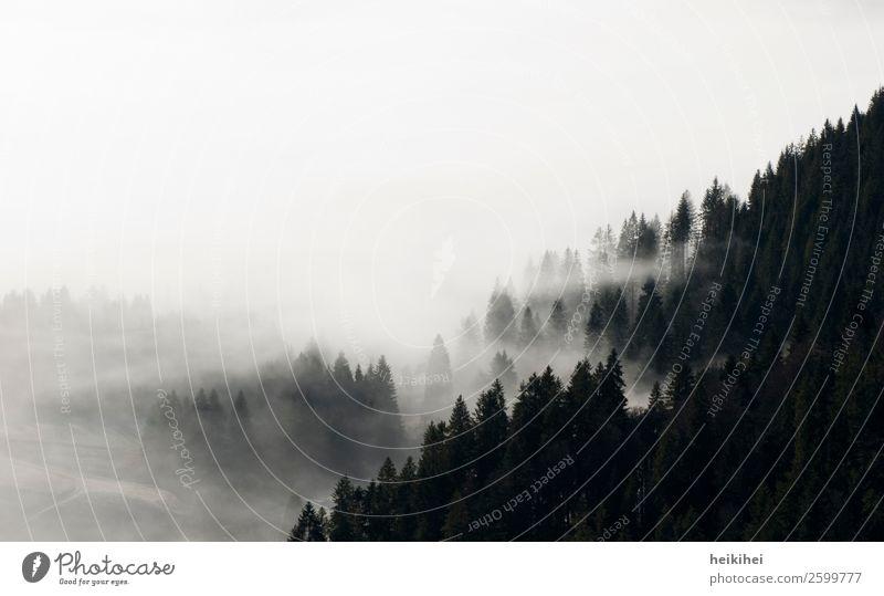 Sky Nature Vacation & Travel Plant White Landscape Tree Loneliness Calm Far-off places Mountain Black Autumn Natural Art Tourism