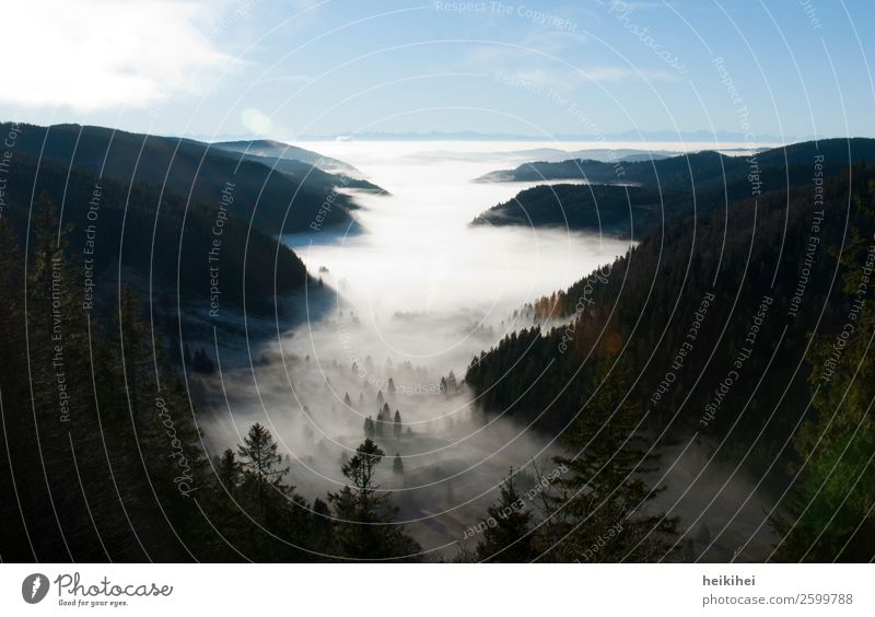 Late summer fog in the Black Forest Nature Landscape Sky Clouds Sunrise Sunset Summer Autumn Fog Tree Hill Alps Mountain Peak Canyon Far-off places Natural