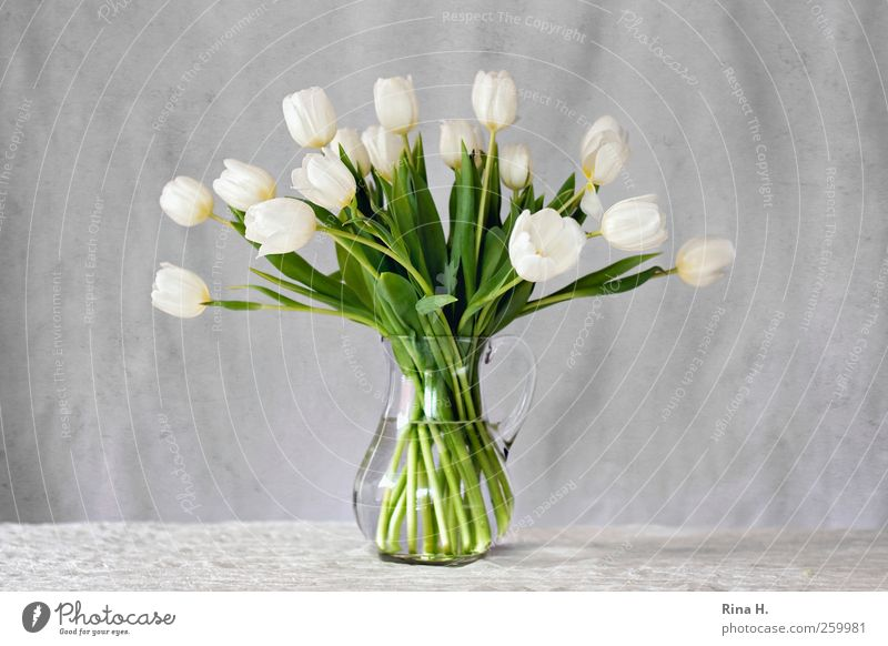 White Tulips Elegant Style Living or residing Decoration Spring Bouquet Vase glass vase Blossoming Fresh Bright Green Colour photo Interior shot Deserted