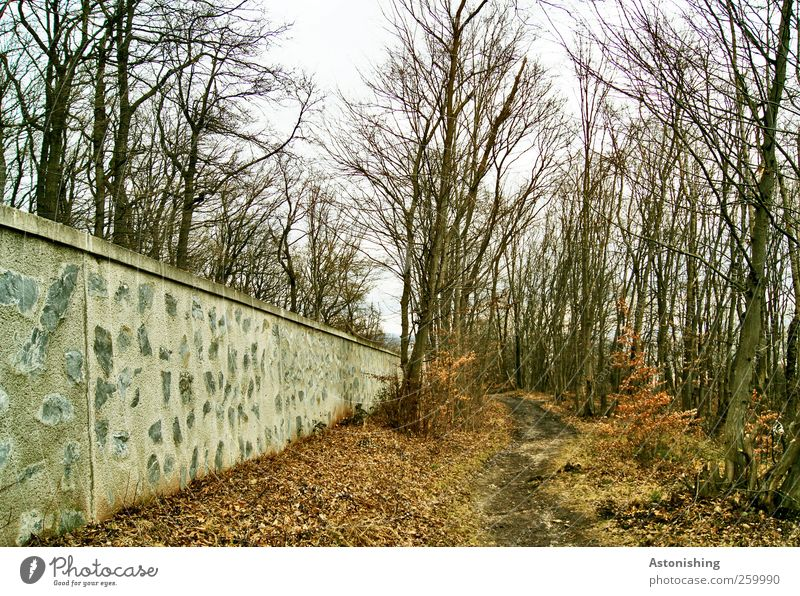 along the wall 2 Environment Nature Landscape Plant Earth Sky Autumn Winter Weather Tree Grass Bushes Forest Wall (barrier) Wall (building) Lanes & trails Stone