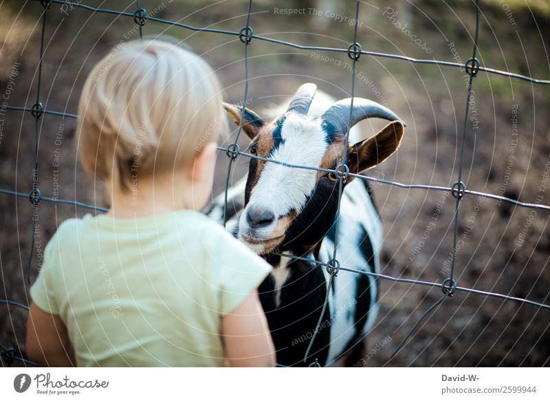 who's curious? Lifestyle Harmonious Well-being Contentment Senses Human being Child Toddler Girl Boy (child) Infancy 1 1 - 3 years Animal Observe Curiosity Cute