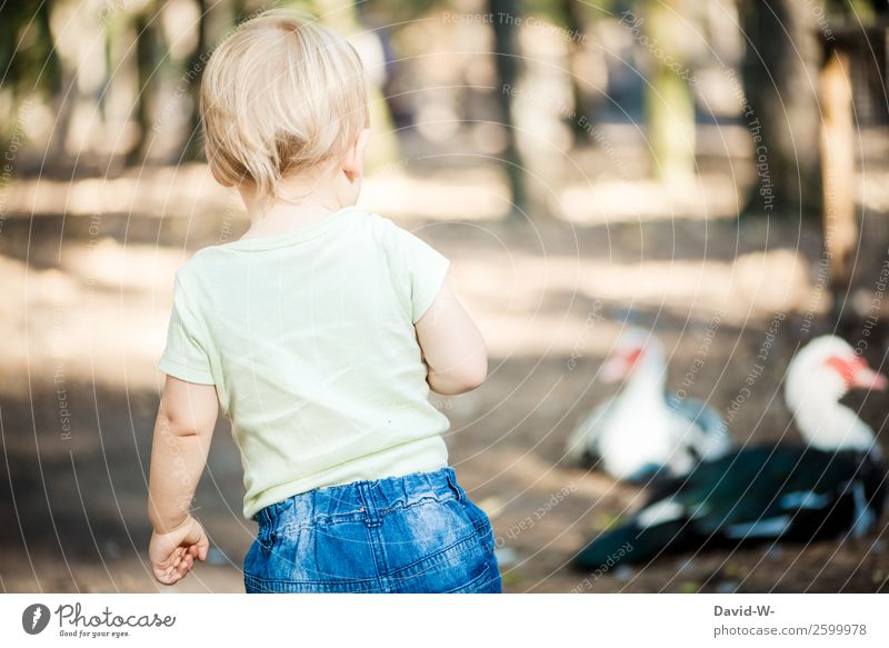 Curious? Joy Human being Child Toddler Girl Boy (child) Infancy Life 1 1 - 3 years Environment Nature Animal Bird Observe Duck Curiosity Discover Cute Timidity