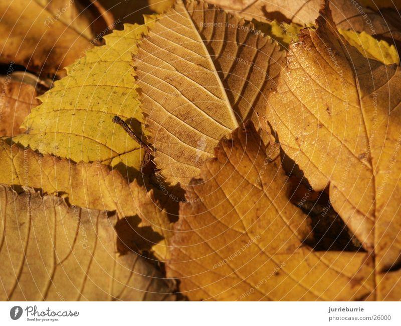 blaterdek Autumn Grasp Bundle Tree Brochure bladerdek