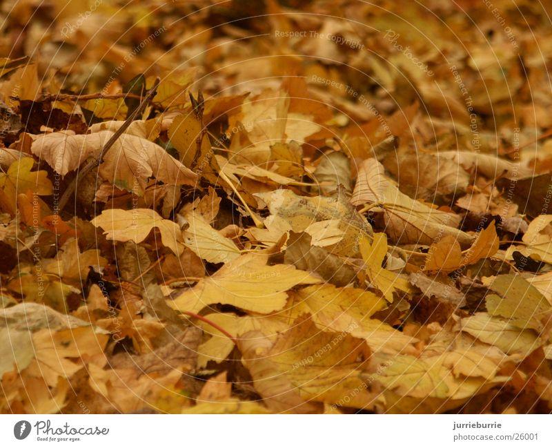 Autumn Mixture Grasp Bundle Brochure