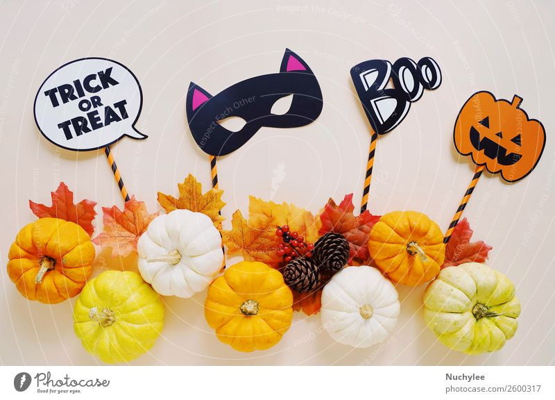 Flat lay of halloween props for party with pumpkins Design Joy Happy Decoration Feasts & Celebrations Thanksgiving Hallowe'en Art Autumn Ornament Hip & trendy