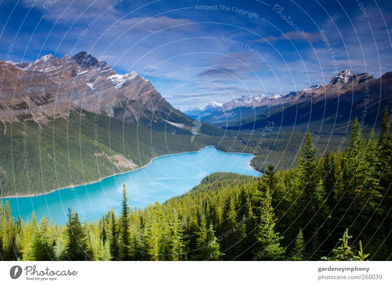 Peyto Lake Vacation & Travel Tourism Summer Mountain Environment Nature Landscape Sky Weather Beautiful weather Tree Wild plant Park Forest Virgin forest Rock