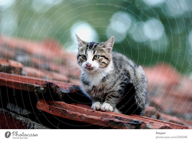baby cat Cat White Green Beautiful Red Animal Black Gray Warmth Brown Pink Elegant Success Cool (slang) Cute Pet