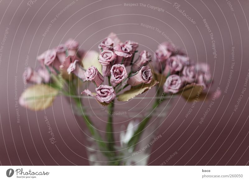 La vie en rose Plant Flower Rose Bouquet Paper rose Glass Blossoming Faded To dry up Old Simple Natural Beautiful Gloomy Dry Brown Green Pink Sympathy Romance