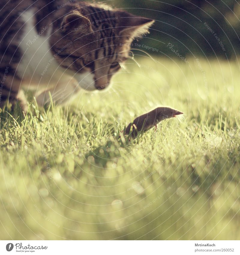 UAAAAAAAAAAH! Animal Pet Wild animal Dead animal Cat Mouse 2 Hunting as dead as a doornail Colour photo Multicoloured Exterior shot Deserted Day Light Shadow