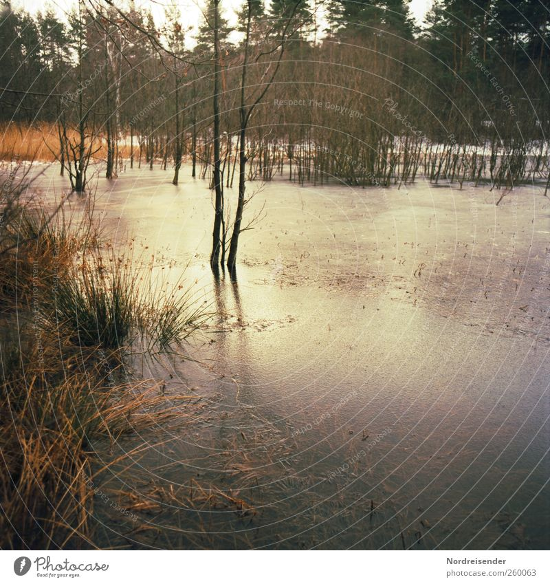 Nature Water Tree Plant Winter Forest Landscape Grass Moody Ice Climate Frost Seasons Common Reed Freeze Pond
