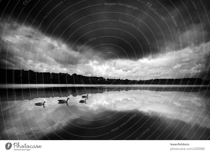 Swan Lake Nature Landscape Water Sky only Clouds Storm clouds Summer Autumn Bad weather Gale Thunder and lightning Swimming & Bathing Esthetic Moody Surprise