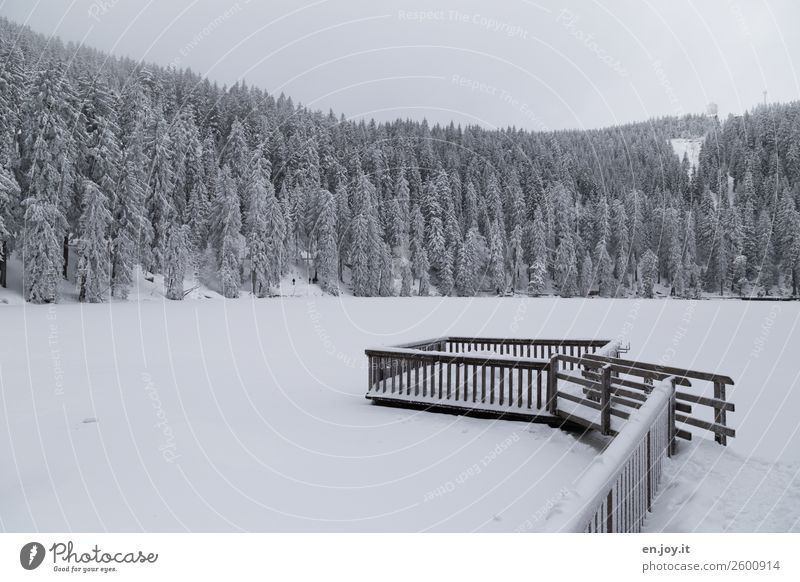Nature Vacation & Travel White Landscape Relaxation Calm Forest Winter Mountain Environment Cold Snow Germany Lake Trip Ice