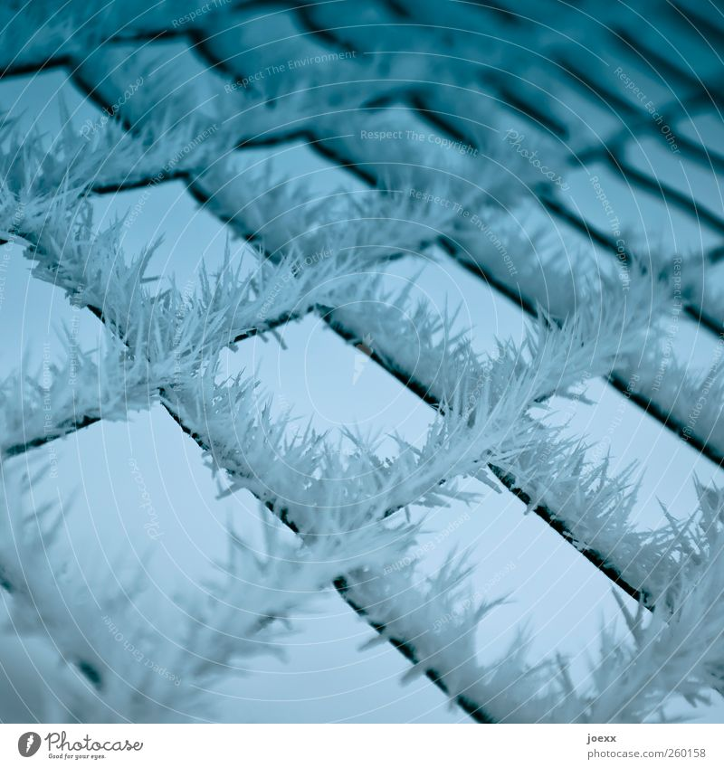 barbed wire Winter Ice Frost Sharp-edged Cold Point Blue Black White Chaos Nature Arrangement Protection Ice crystal Wire netting fence Colour photo