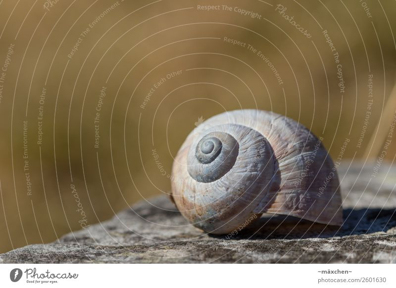 snail shell Nature Snail Lie Calm Snail shell Brown Gray Scratched Structures and shapes Blur Macro (Extreme close-up) Grassland Stone Stony Green acuity Empty
