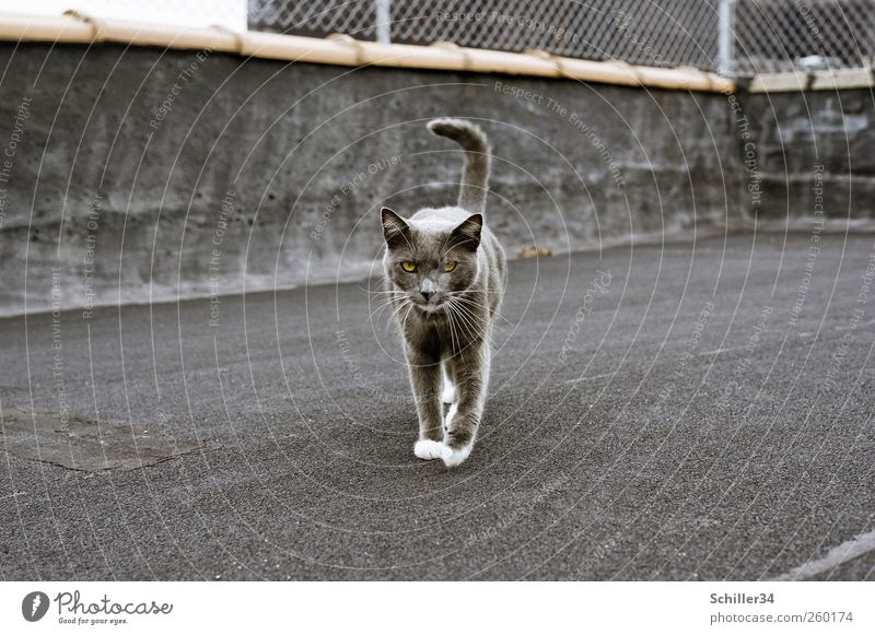 CATWALK New York City House (Residential Structure) Industrial plant Terrace Roof Animal Pet Cat Pelt Paw Domestic cat 1 Going Esthetic Elegant Astute Smart