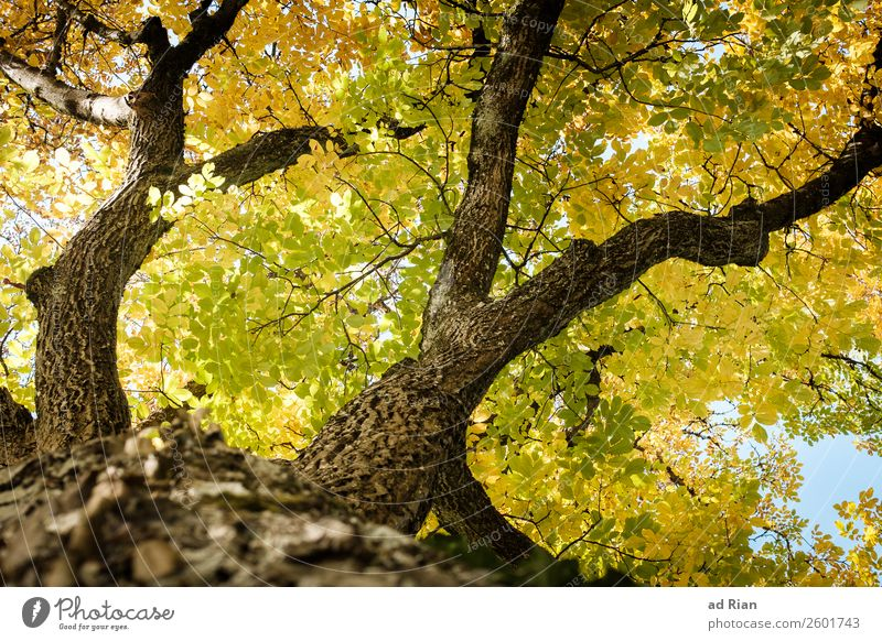 Tree from below in autumn Leaf Nature Branch Abstract Exterior shot Autumn Fresh Neutral Background Green Garden Plant veins