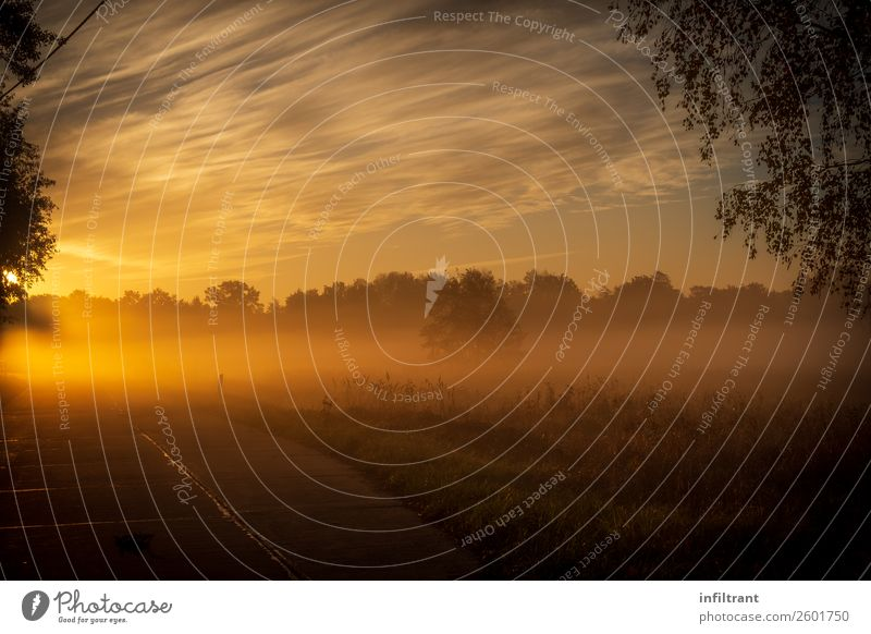 morning fog Environment Nature Landscape Sky Clouds Sun Sunrise Sunset Autumn Fog Meadow Esthetic Natural Brown Yellow Orange Moody Calm Humble Dream Loneliness