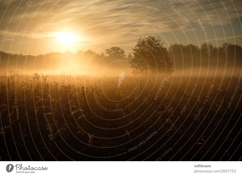 morning fog Environment Nature Landscape Sun Autumn Fog Meadow Field Forest Esthetic Natural Brown Yellow Orange Romance Calm Life Humble Dream Loneliness Idyll