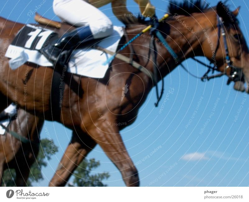 Now run! Horse Horseracing Derby Bridle Jodhpurs Equestrian sports Stapes 11 Hot Perspire Perspiration Racing sports Sporting event Bet Game of chance Success