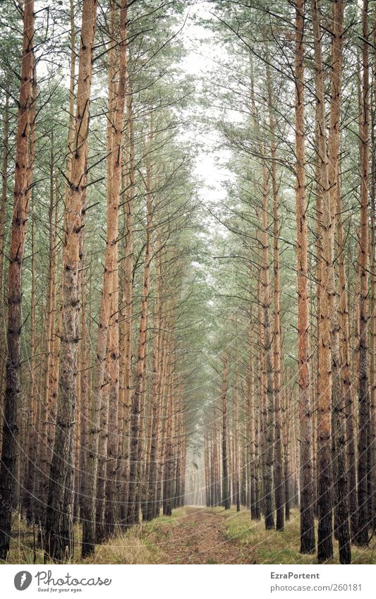 Nature Green Plant Tree Animal Landscape Winter Autumn Lanes & trails Wood Gray Brown Earth Footpath Tree trunk Treetop