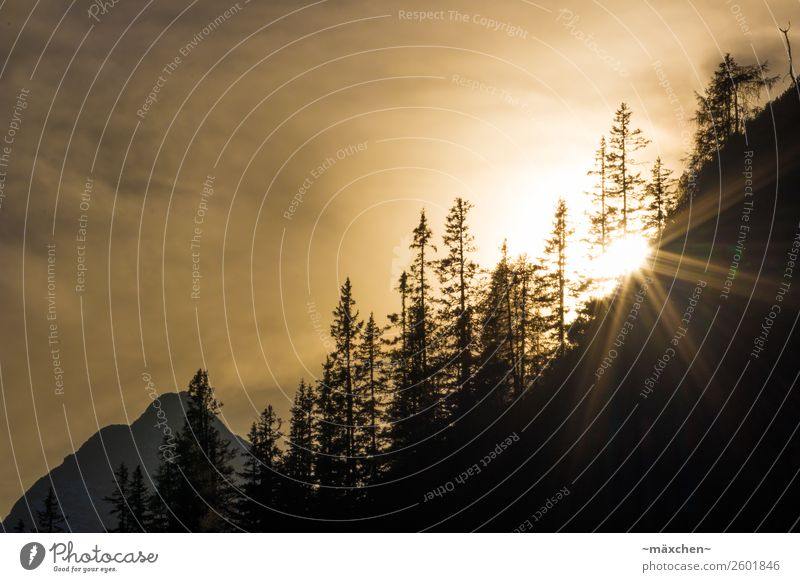 Sunset in the mountains Nature Landscape Plant Air Sky Clouds Weather Beautiful weather Tree Forest Rock Alps Mountain Peak Gold Sunbeam Coniferous forest