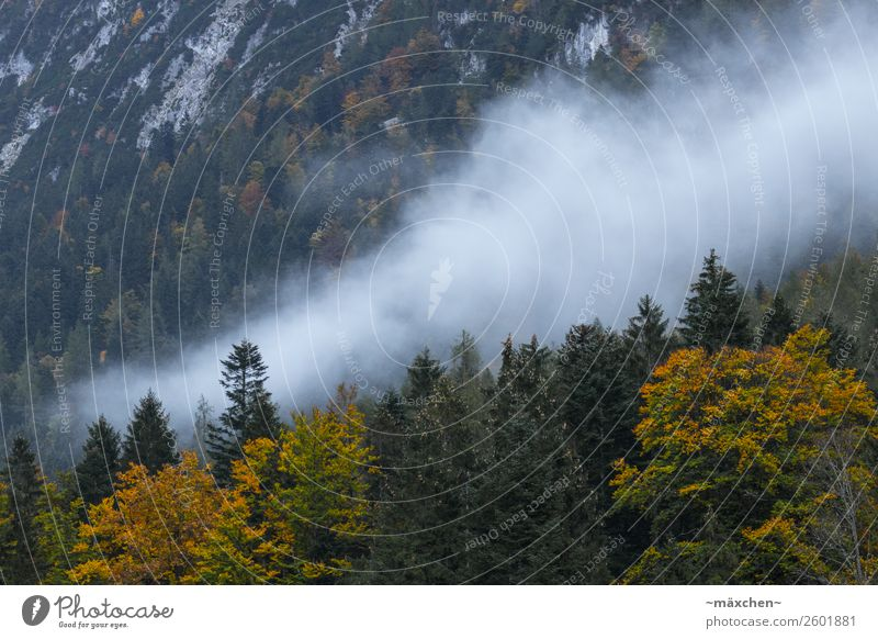fog Nature Landscape Animal Clouds Autumn Fog Tree Forest Rock Alps Mountain Yellow Gray Green Orange White Deciduous forest Deciduous tree Leaf