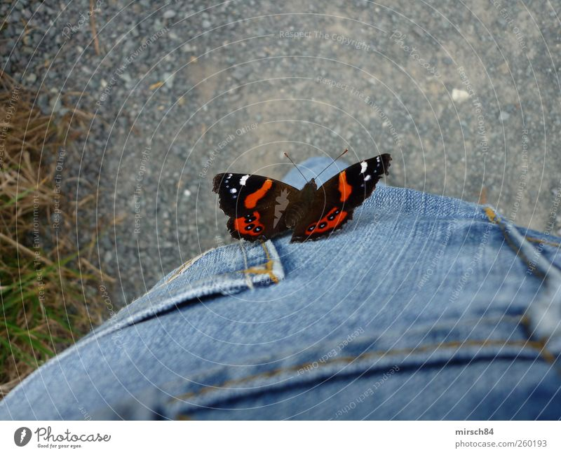 butterfly Butterfly 1 Animal Flying Blue Red Ease Multicoloured Close-up Animal portrait