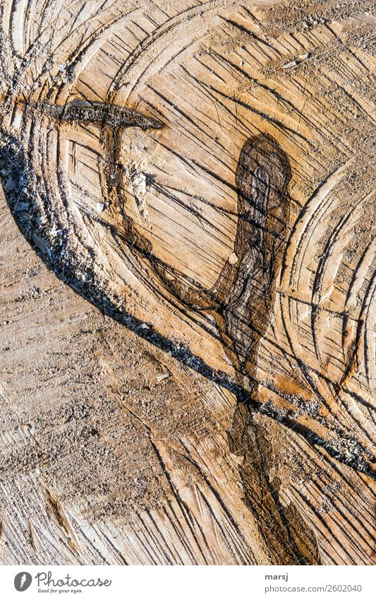 Hammer and anvil? Nature Plant Tree Tree trunk Wood grain Annual ring Cross-section saw cut sawn Exceptional Fragrance Fresh Gigantic Uniqueness Broken Brown