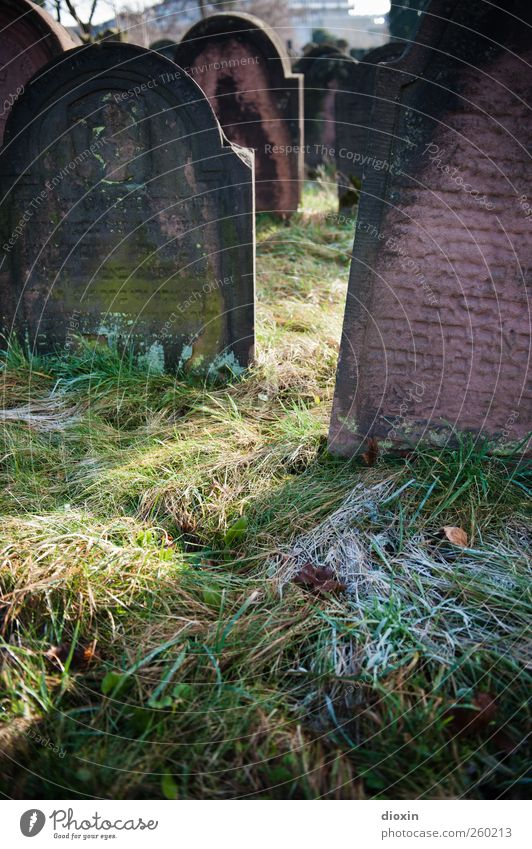 Frost on the graves Sunlight Winter Weather Ice Grass Worms Tourist Attraction Stone Characters Old Authentic Cold Belief Humble Sadness Grief Death