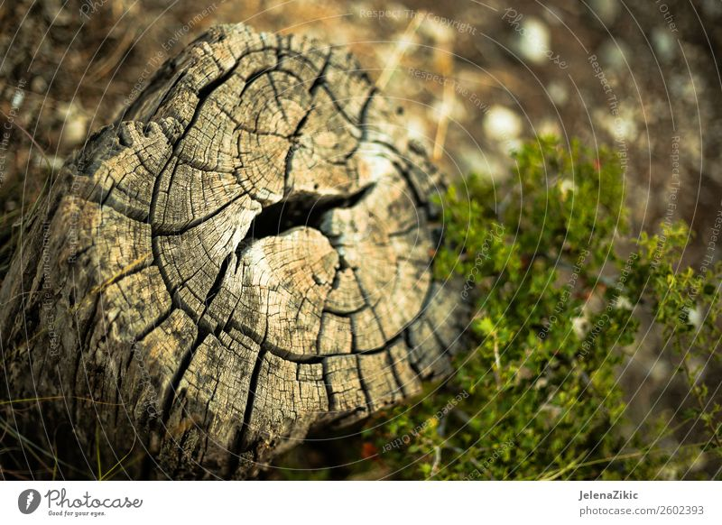 Close-up view of the old stump Environment Nature Landscape Plant Tree Grass Park Forest Wood Old Large Natural Brown Green background Consistency Cut circle