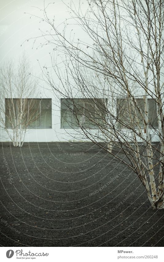 White Tree Black House (Residential Structure) Cold Window Garden Facade Design 3 Gloomy Simple Thin Dry Symmetry Noble