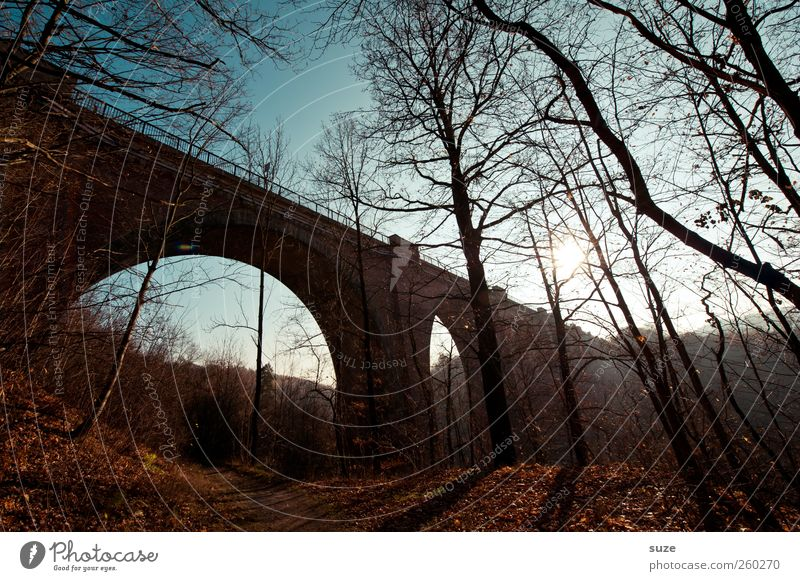 Sky Nature Tree Loneliness Landscape Dark Forest Environment Autumn Lanes & trails Moody Weather Climate Beautiful weather Bridge Footpath