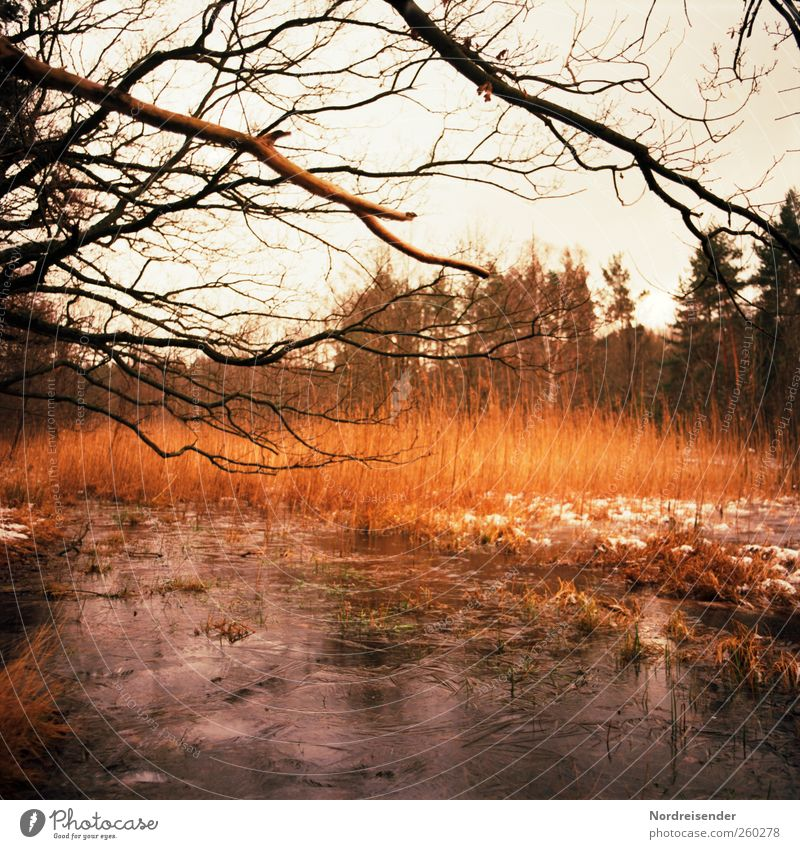 Burning ice Senses Calm Trip Freedom Winter Nature Landscape Plant Climate Ice Frost Snow Tree Forest Lakeside Bog Marsh Illuminate Dream Colour Stagnating