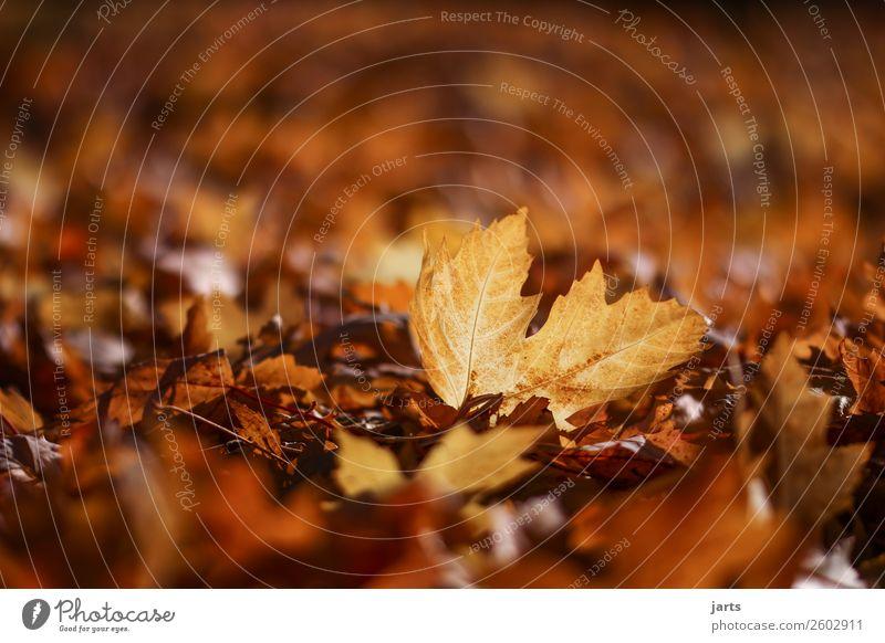 Nature Plant Leaf Calm Yellow Autumn Natural Park Gold Lie Beautiful weather Simple Patient