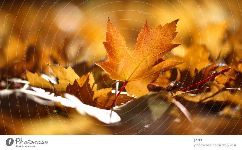 Nature Plant Leaf Calm Yellow Autumn Natural Park Gold Lie Beautiful weather Simple Hope Serene Patient