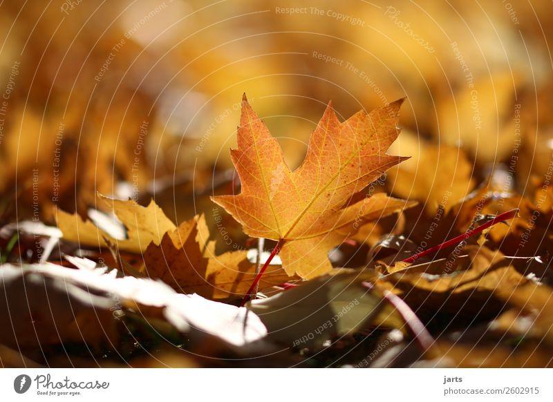 Nature Plant Beautiful Leaf Calm Autumn Bright Park Lie Glittering Beautiful weather Hope Serene Patient