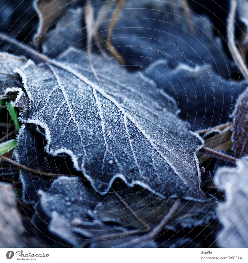 Nature Blue Loneliness Leaf Winter Cold Environment Sadness Ice Climate Frost Grief Seasons Freeze Ice crystal Rachis