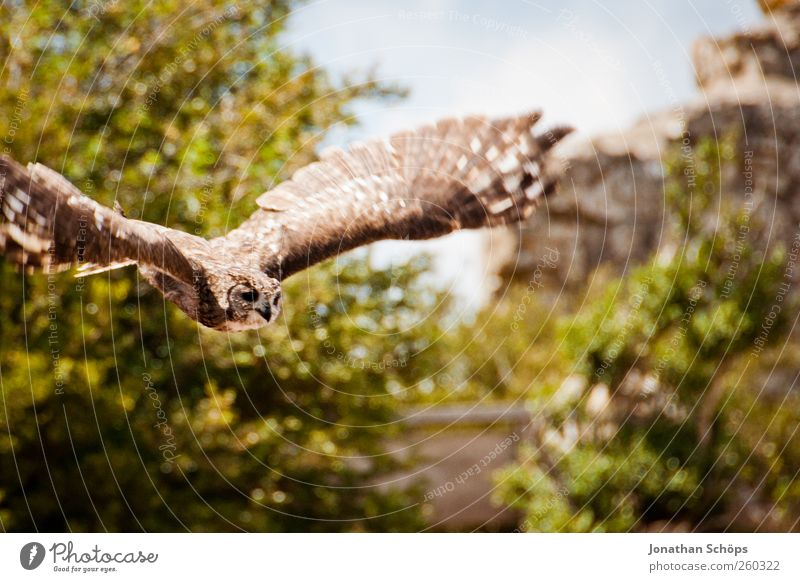 Eagle owl - sticks well and it can also fly Trip Adventure Far-off places Freedom Mountain Environment Nature Landscape Plant Animal Bird 1 Power Hunting Flying