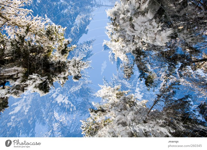 Nature Tree Winter Environment Cold Snow Trip Climate Crazy Perspective Uniqueness Sign Beautiful weather Environmental protection Cloudless sky Winter vacation