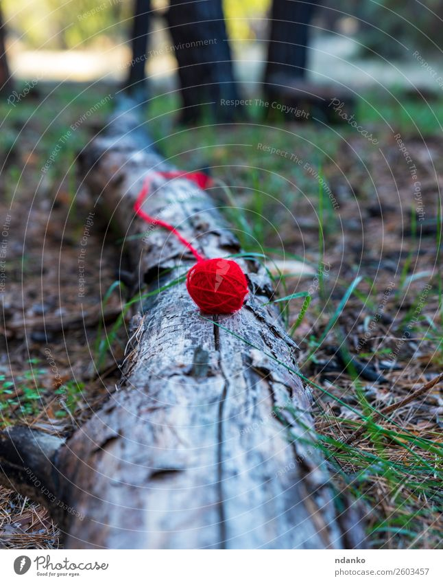 red wool ball lies on a tree trunk Knit Craft (trade) Rope Nature Landscape Tree Grass Forest Lie Red Beautiful Serene Colour Idea Lose thread yarn Wool