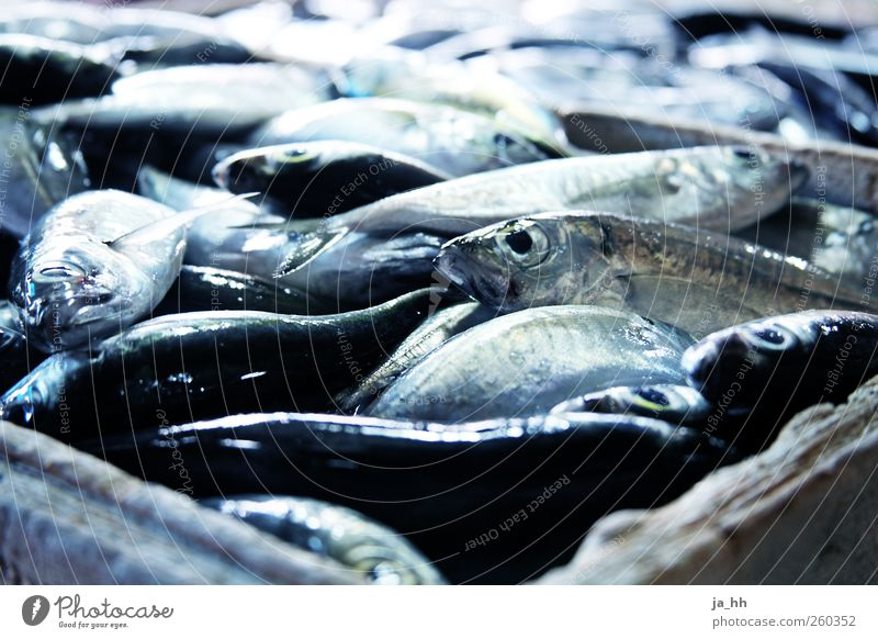 fish Fish Shopping Fishing (Angle) Fishery Ocean Scales Slimy Marine animal Fish market Ice Chilled Clean Roast Meal Nutrition Markets Offer freshness Fresh