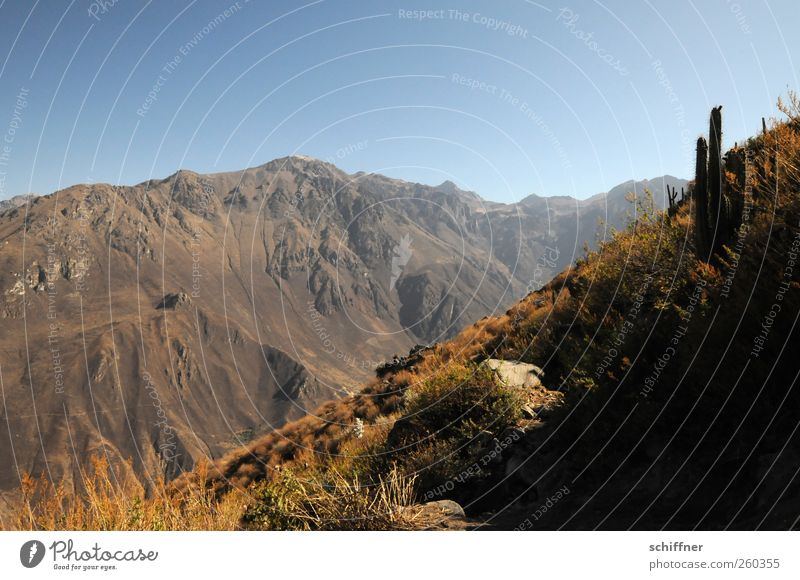 Cañón del Colca Environment Nature Landscape Elements Earth Sand Air Sky Cloudless sky Sunlight Summer Climate Beautiful weather Rock Mountain Peak Canyon Dry