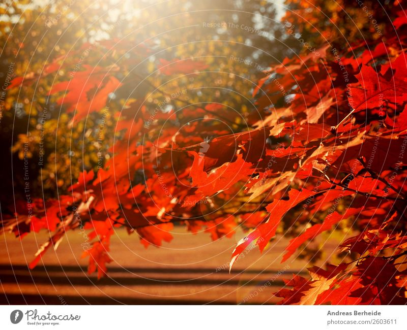 Autumn Nature Sunrise Sunset Sunlight Tree Leaf Park Red Relaxation Peace Calm autumnal Background picture beautiful beauty blurred branch bright bush Canada