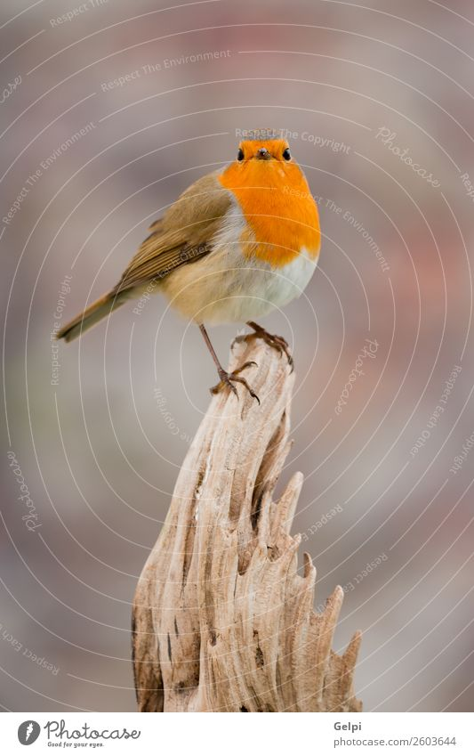 small bird with a orange feathers Beautiful Life Man Adults Environment Nature Animal Bird Small Natural Wild Brown Green White wildlife robin common perched