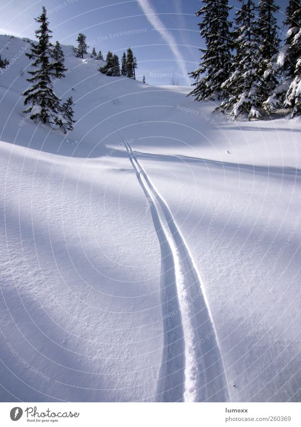 deep powder Sports Winter sports Skiing Nature Sky Sunlight Beautiful weather Snow Tree Fir tree Alps Mountain Vapor trail Line Stripe Tracks Fantastic Cold