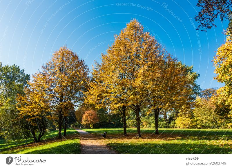 Autumnal colored trees with blue sky Relaxation Vacation & Travel Tourism Nature Landscape Cloudless sky Weather Tree Grass Leaf Park Lanes & trails Blue Yellow