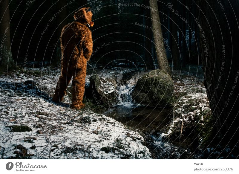 In the wild Human being Masculine Young man Youth (Young adults) Man Adults Life 1 Pelt Brunette Animal Wild animal Bear Bearskin Urinate Forest Nature Tree