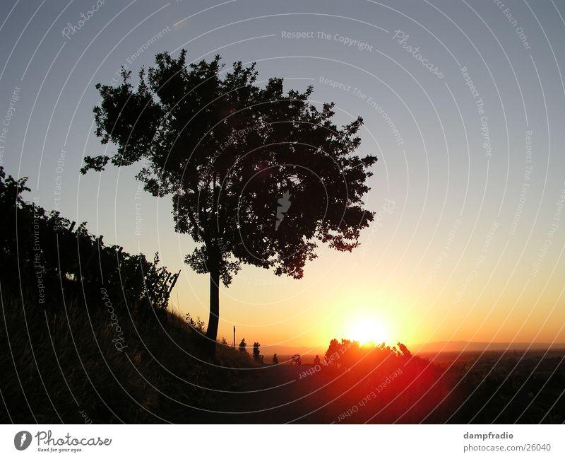evening tree Twilight Sunset Tree Vineyard Mountain Evening sundown