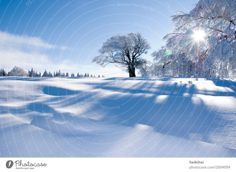 Vacation & Travel Nature Blue Landscape White Sun Tree Relaxation Calm Joy Winter Cold Natural Snow Tourism Leisure and hobbies