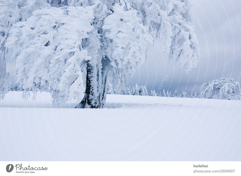 Vacation & Travel Nature Plant Blue Beautiful Landscape White Tree Relaxation Calm Winter Far-off places Mountain Cold Natural Snow